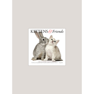 """2021 Kittens & Friends 7"""" x 7"""" MINI WALL CALENDAR"""