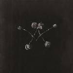 Waterstrider - Nowhere Now LP